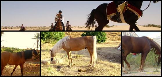 horse riding (1).jpg