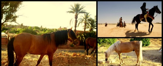 horse riding (2).jpg